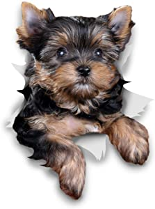 Winston & Bear 3D Dog Stickers - 2 Pack - Cute Yorkshire Terrier for Wall, Fridge, Toilet and More - Retail Packaged Yorkshire Terrier Dog Stickers - Yorkie Car Decal