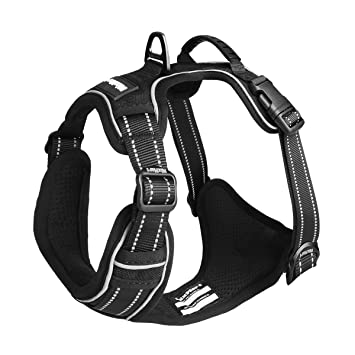A Dog Harness