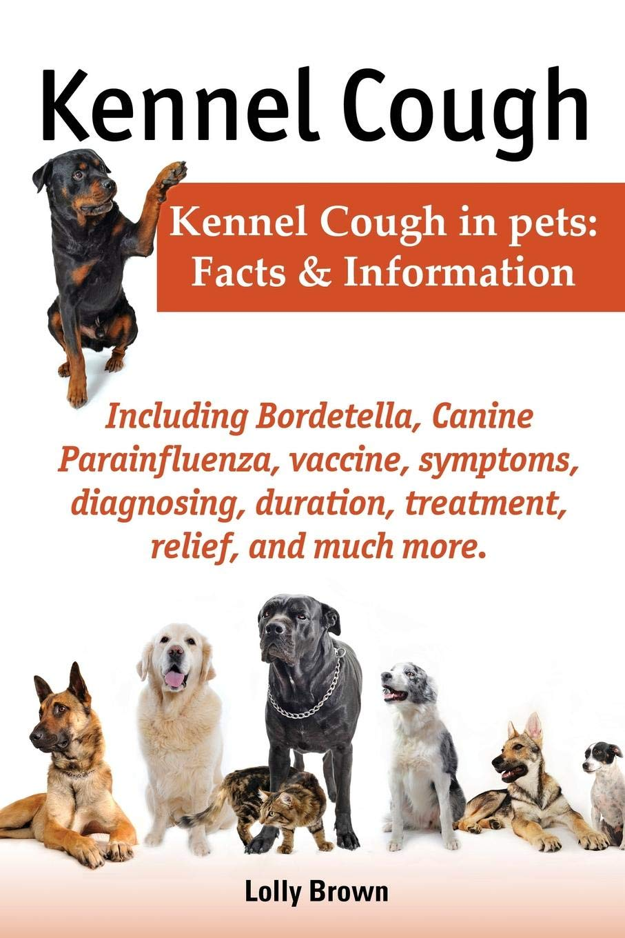 Kennel Cough Vaccine Cost >> Kennel Cough Including Symptoms Diagnosing Duration