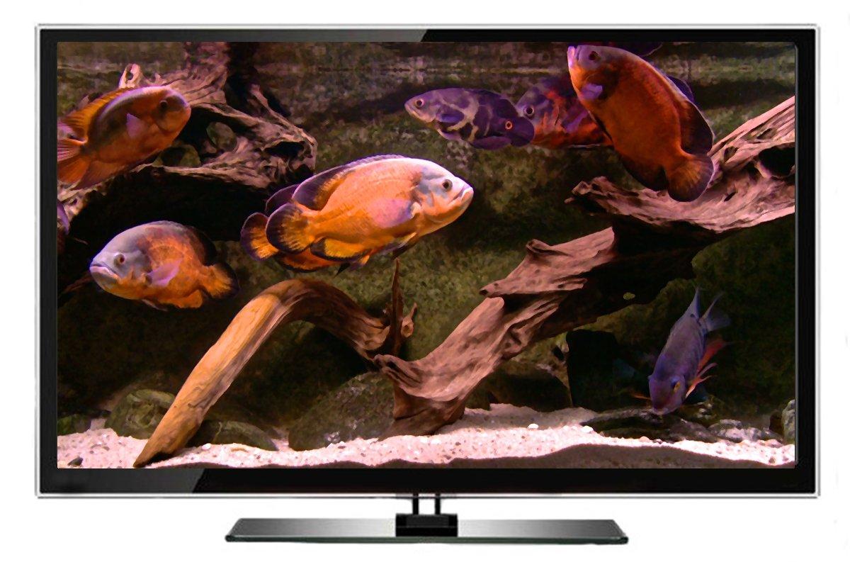 Acuario DVD - Acuarios Sudamericanos con Sonidos de Música y Naturaleza - Filmado en HD: Amazon.es: The Ambient Collection, Acuarios de los ríos y lagos del ...