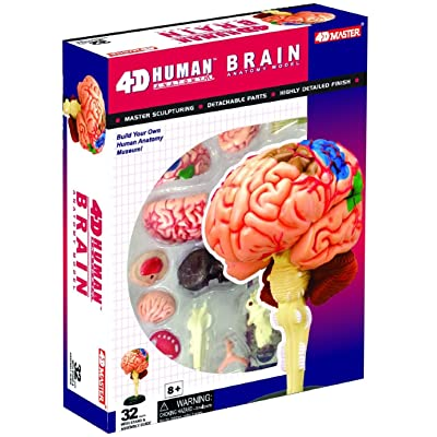 Human Brain Anatomy Model - Build your Own!: Toys & Games