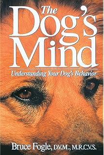 Decoding Your Dog: Explaining Common Dog Behaviors and How