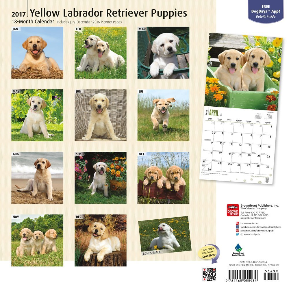 calendario labrador retriever