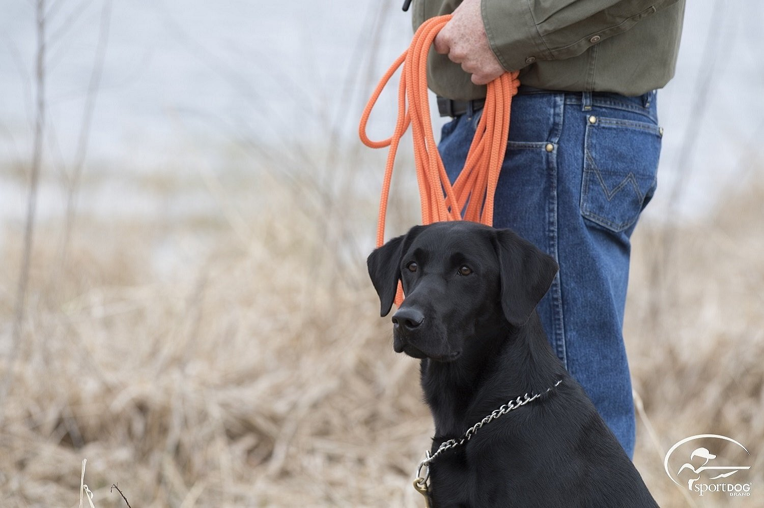 SportDOG Brand Orange Check Cord - 30 Feet Long - Strong but Lightweight Training Tool - Highly Visible and Floats