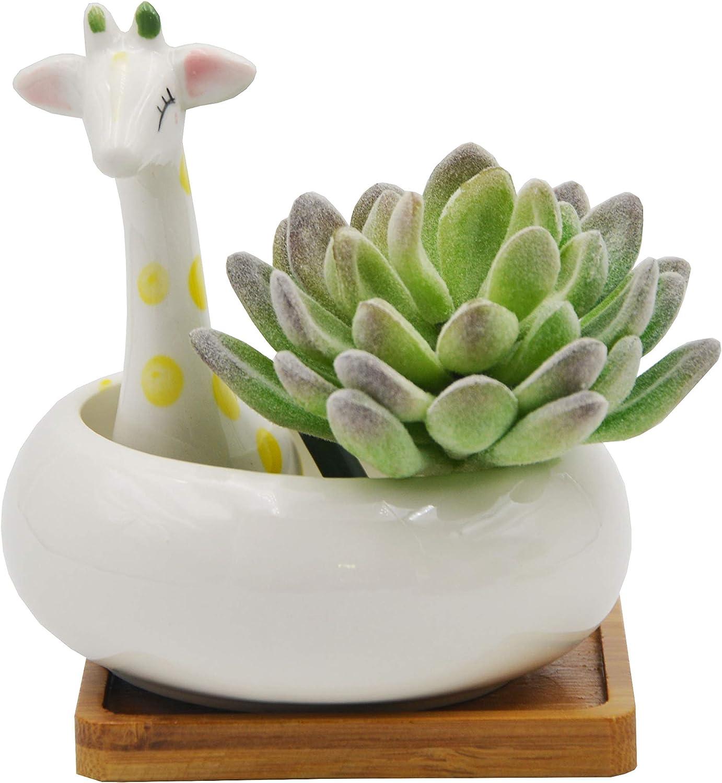 Cartoon Animal Succulent Planter Cactus Flower Pot Desktop for Indoor Plants