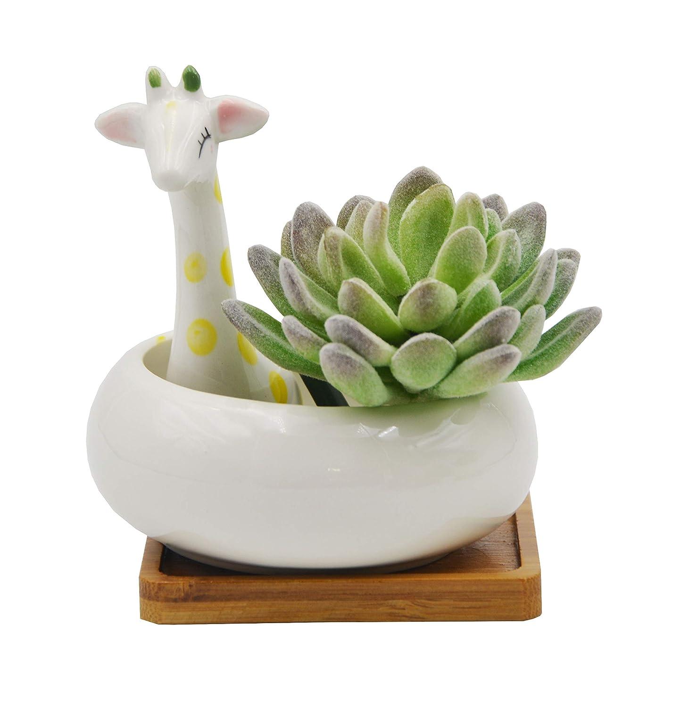 Cute Animal Shaped Cartoon Home Decoration Succulent Flower Plant Pots