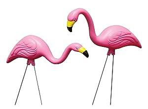 Bloem Flamingo, Pink, 12-Pack