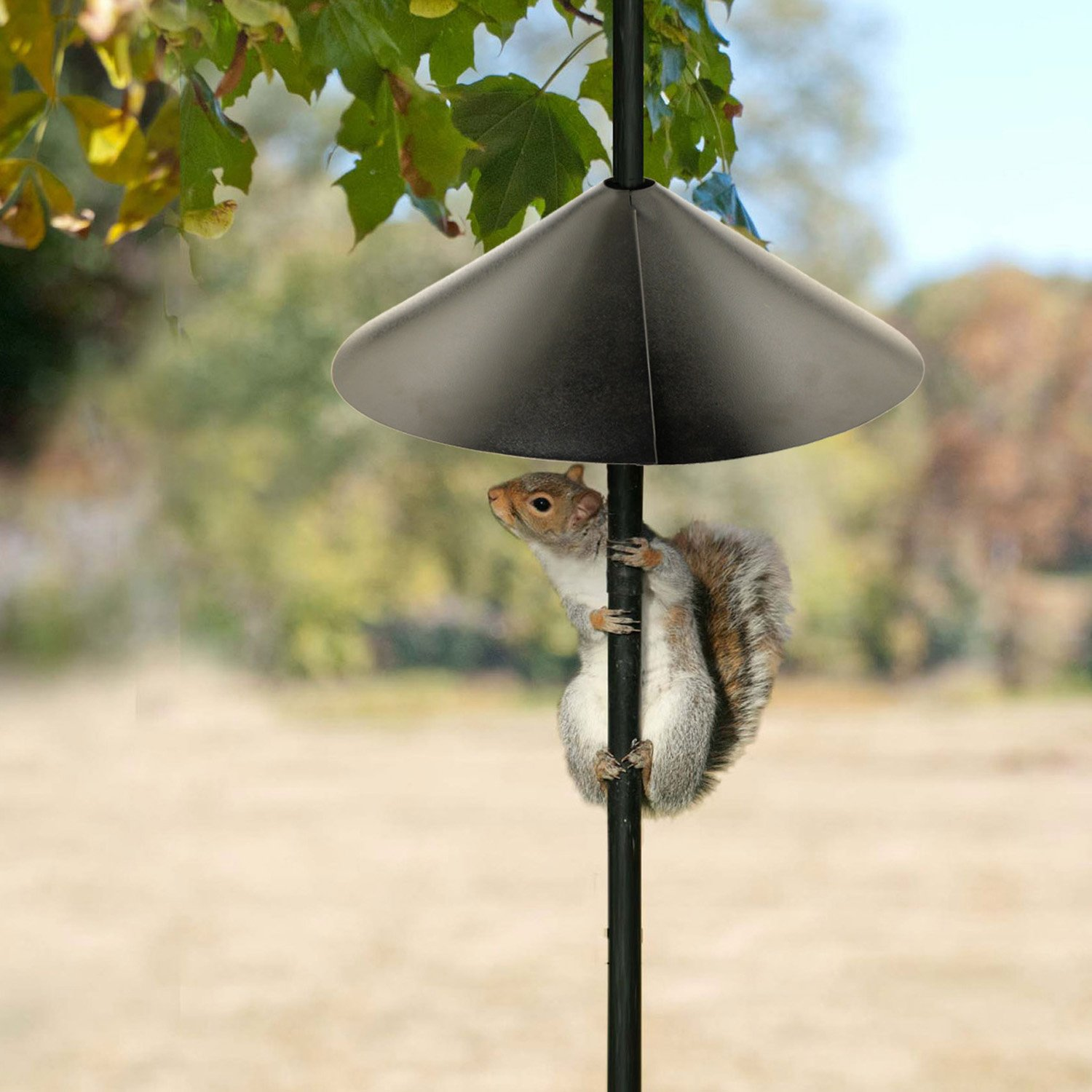 feeder husband guide proof bird to frustrated brome s how squirrel a