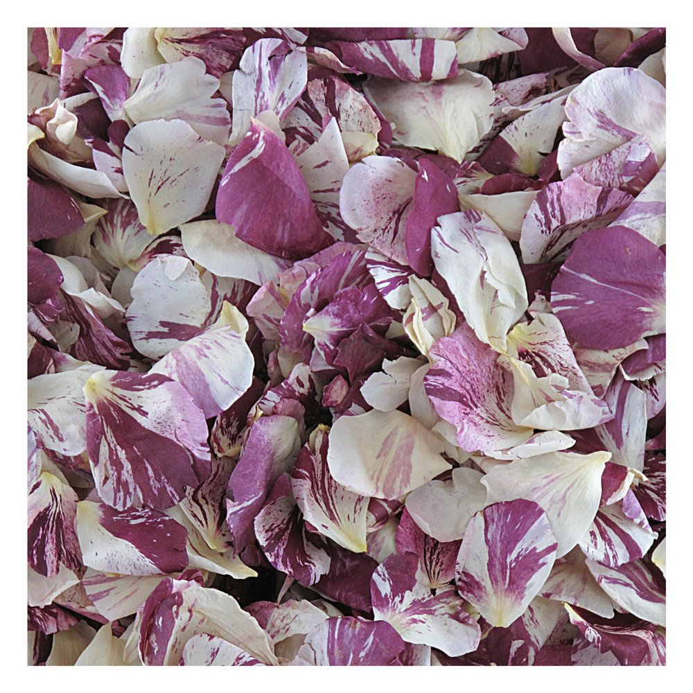 Rose Petals Raspberry Swirl Preserved Freeze-dried Merlot & Ivory Rose Petals by Flyboy Naturals- 120 cups Rose Petals by Flyboy Naturals