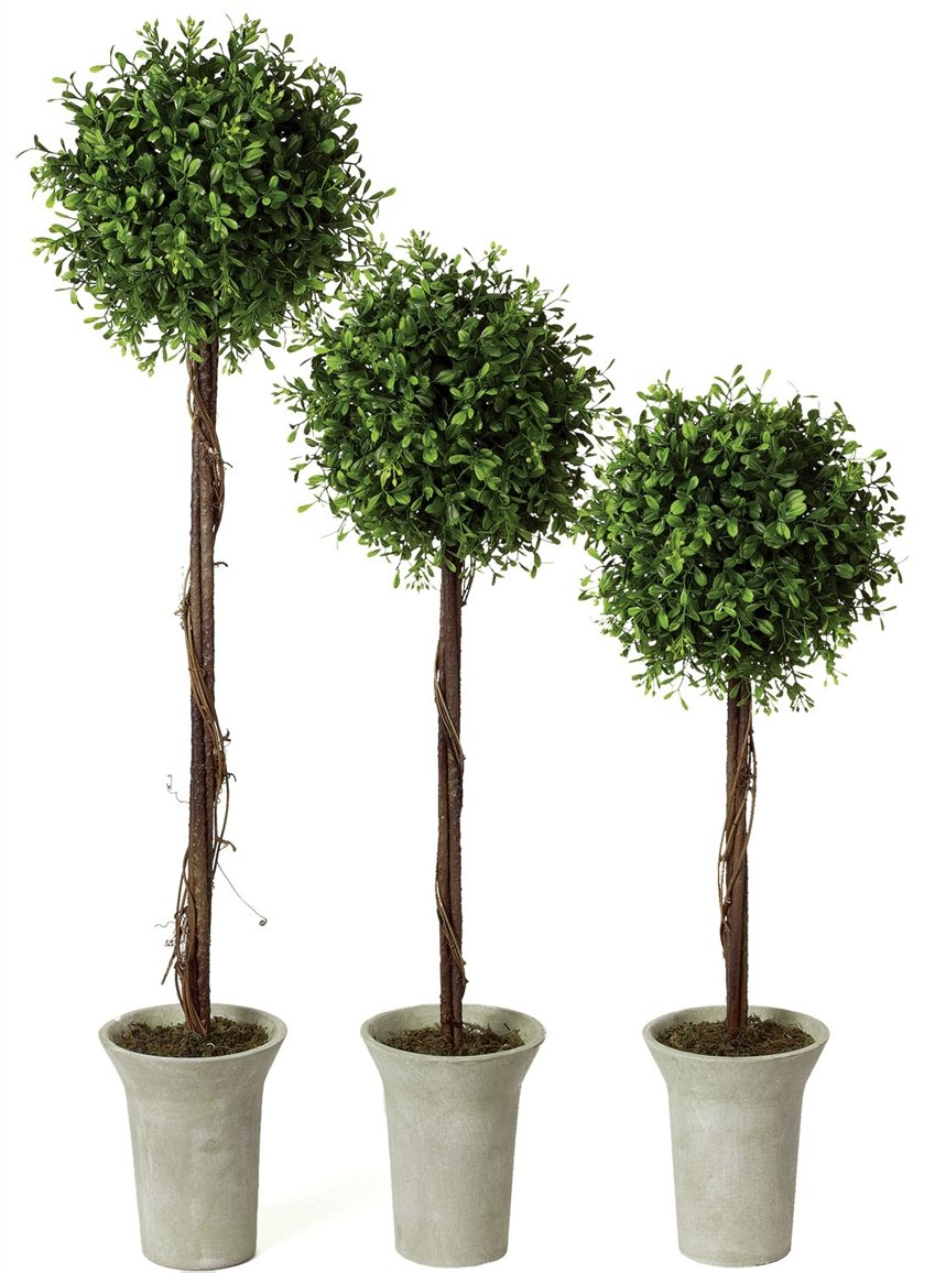 Topiary tree set.