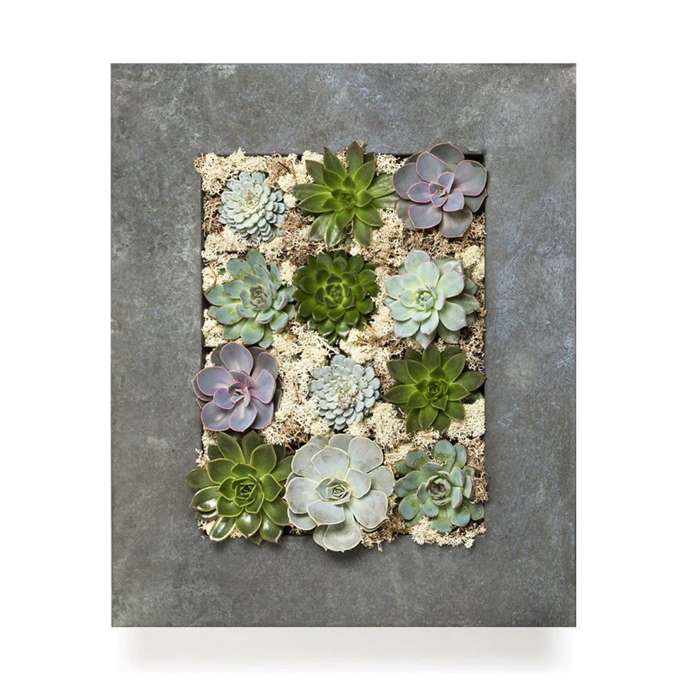 INDOOR PLANT - GRAND LIVING WALL FRAME Can also be supplied fully assembled with live succulent plants. Our exclusive wall art planters create stunning and unique living art for home, office, events, interior design schemes. L50cm x H46cm x W9cm Lightweigh