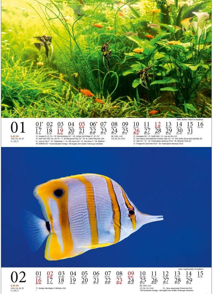 formato DIN A5 1 biglietto regalo Calendario da tavolo 2020 motivo: animali in acquario e sottacqua