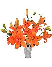 Stargazer Barn Petite Bouquet Orange Royal Lilies With Vase