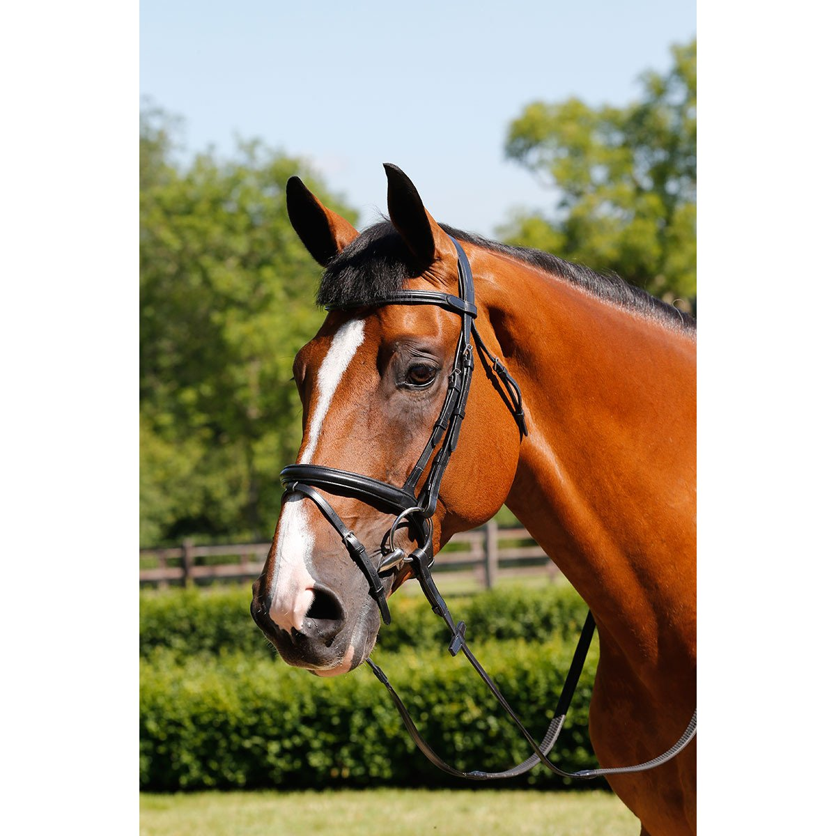 Mark Todd Padded Flash Snaffle Bridle Cob Black