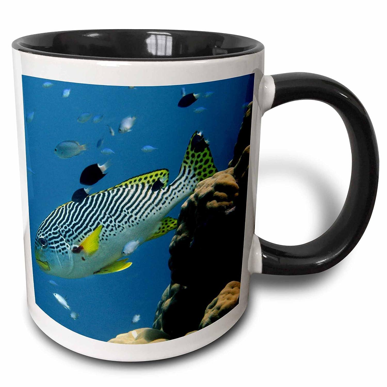 Australia-AU01 DWA3073 Black//White 3D Rose mug/_72004/_4 Diagonal-Banded Sweetlips Great Barrier Reef 11oz David Wall Two Tone Black Mug