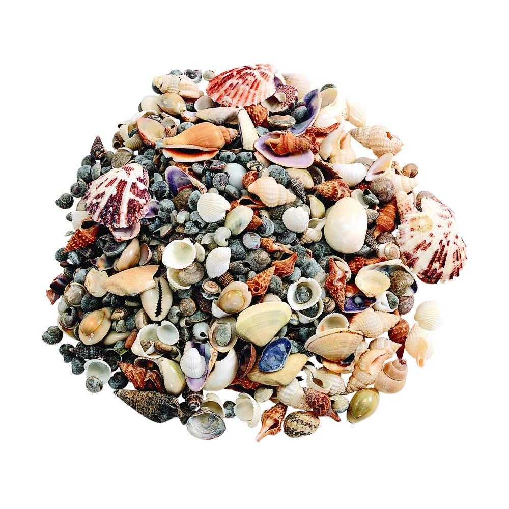 Colorations Assorted Sea Shells, Small, 1 Pound, Nature, Ocean, Decorating, Décor, DIY Crafts, for Kids & Home, STEM