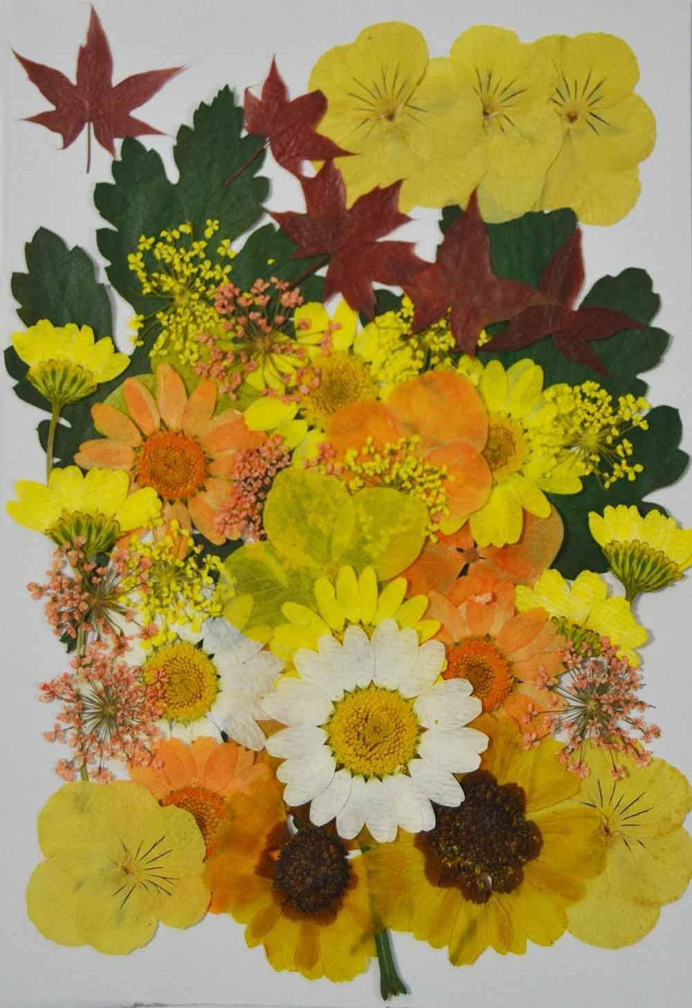 HANDI-KAFU giallo viola, ortensia, foglia d' acero, Sanvitalia vera premuto fiori secchi foglia d' acero