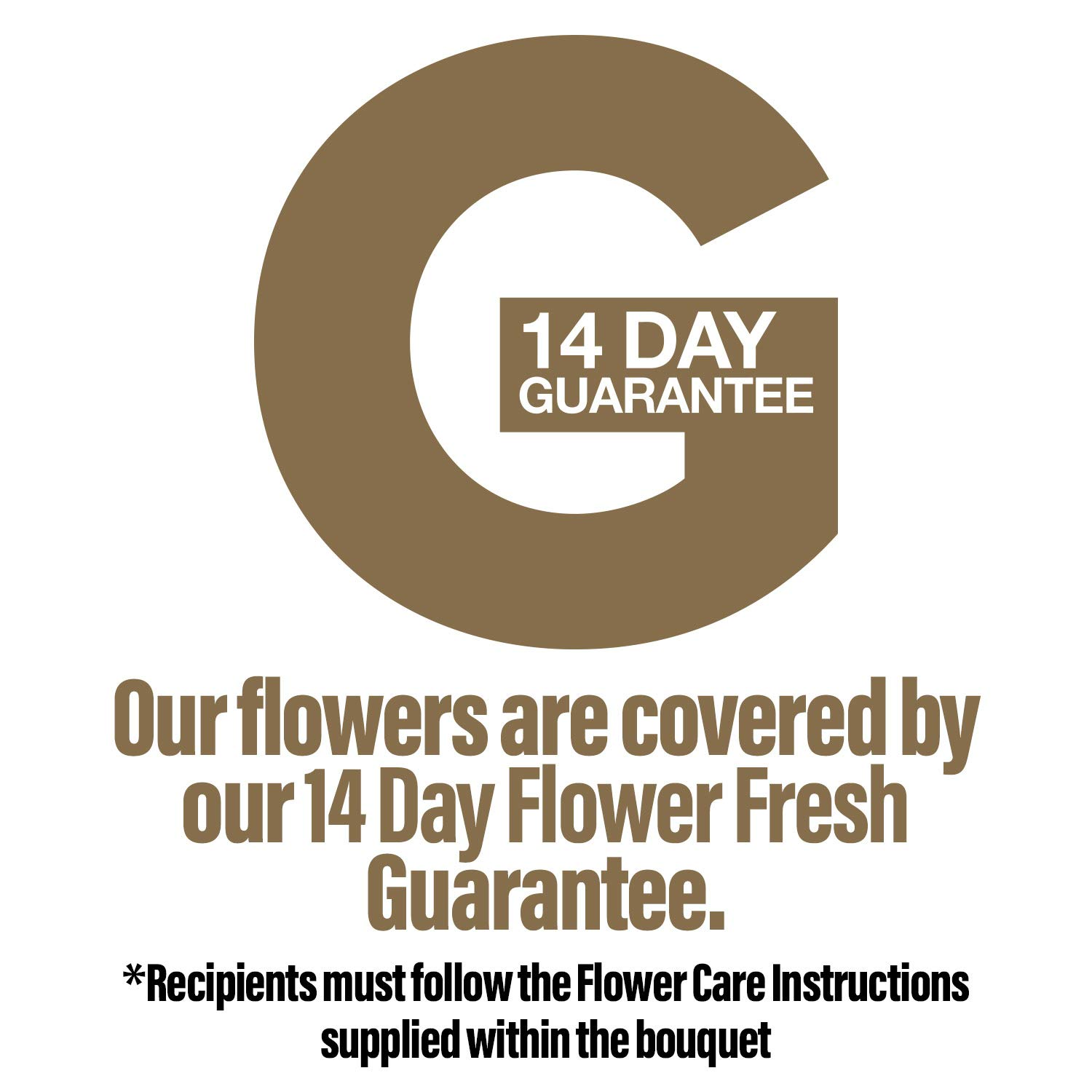 Fresh Flowers Delivered 20 Singapore Orchids Bouquet With