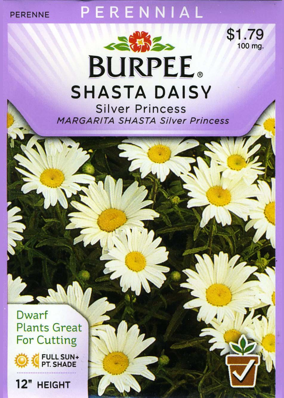 Amazon Burpee Flower Shasta Daisy Silver Princess 30734 White