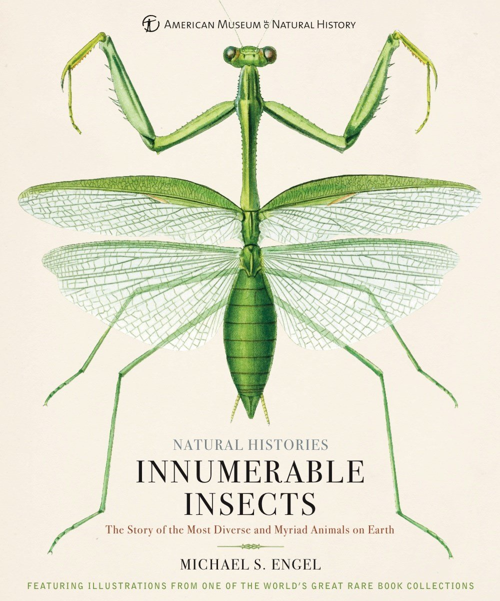 innumerable insects the story of the most diverse and myriad