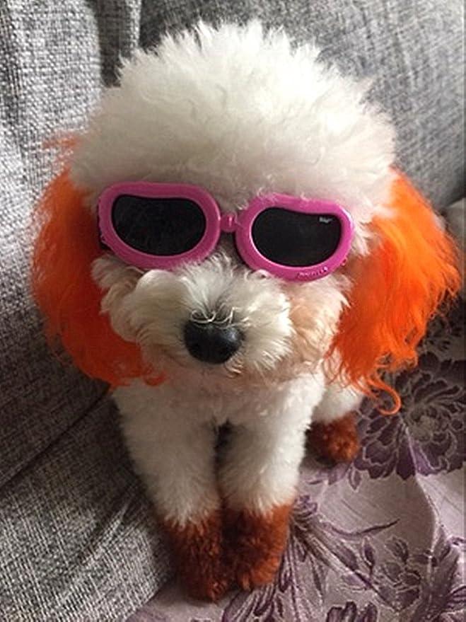 Amazon.com: Antiparras anteojos de sol para gatos o perros ...