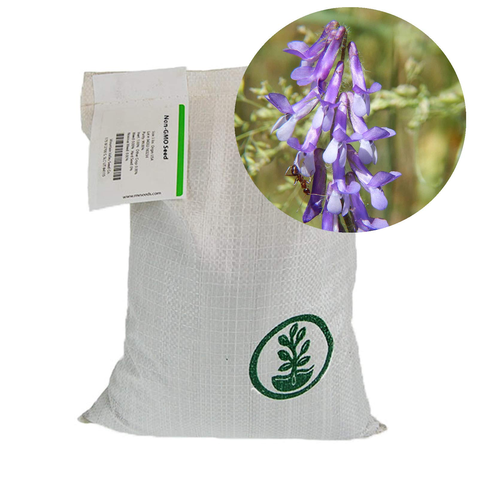 Hairy Vetch Winter Cover Crop Seeds - 50 Lbs Bulk - Field & Pasture Legume Cover Crop Seed