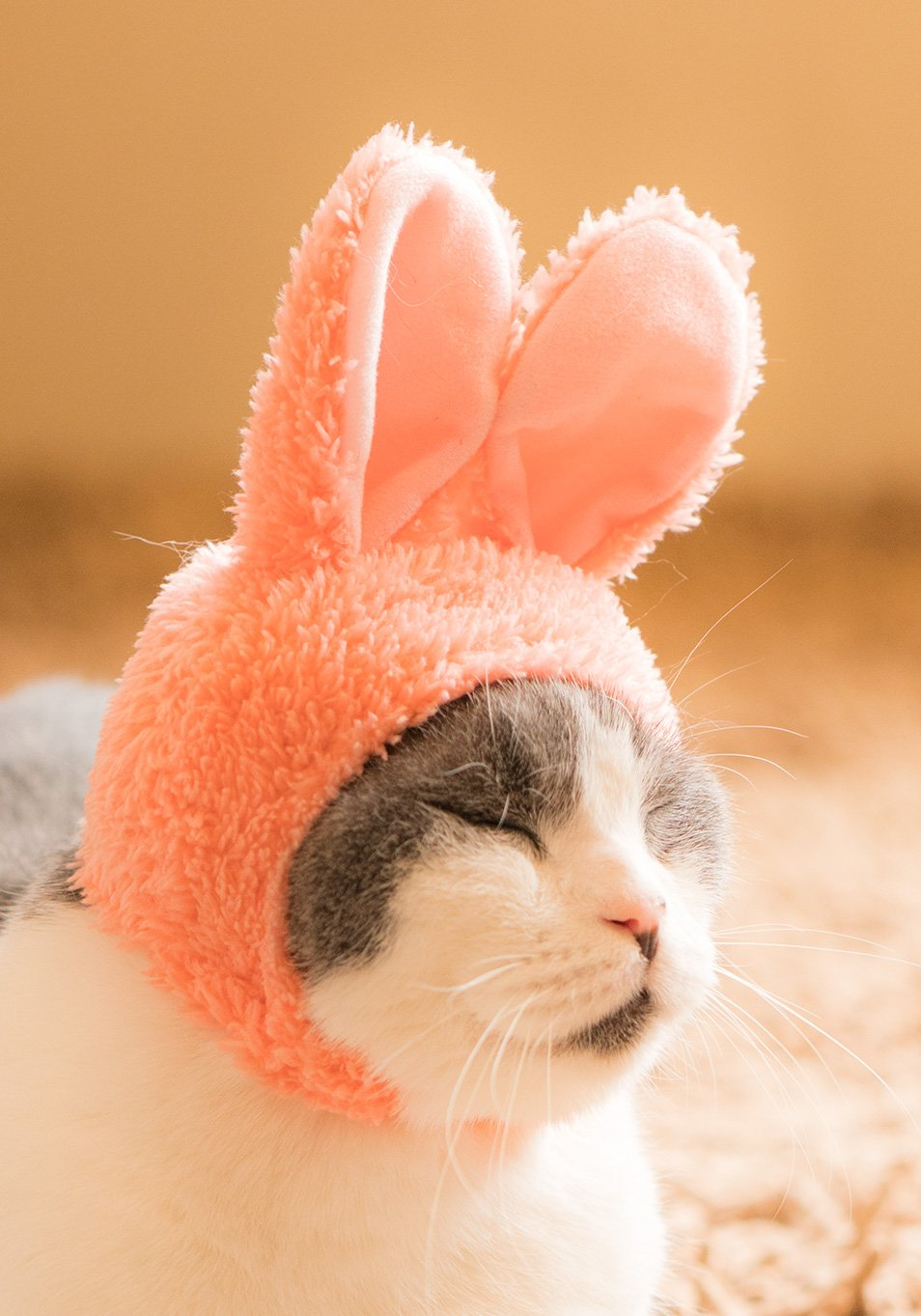 Soft Authentic Japanese Kawaii Design Animal-Safe Materials Rabbit Pet Hat Blind Box Includes 1 of 6 Cute Styles Comfortable and Easy-to-Use Kitty Hood Kitan Club Cat Cap