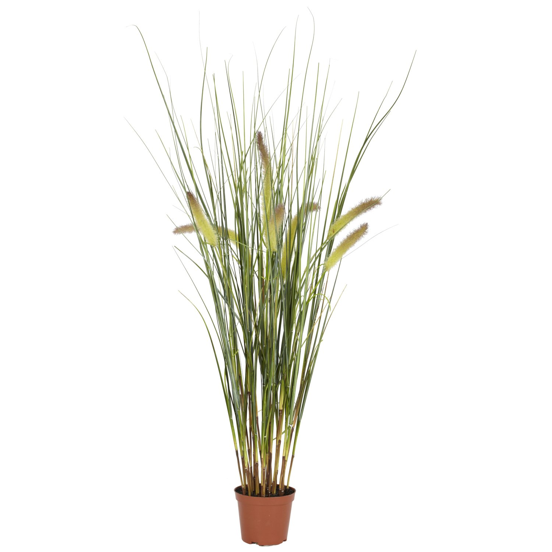 自然に近い6647 2.5インチ草植物 B00BG8RR8I