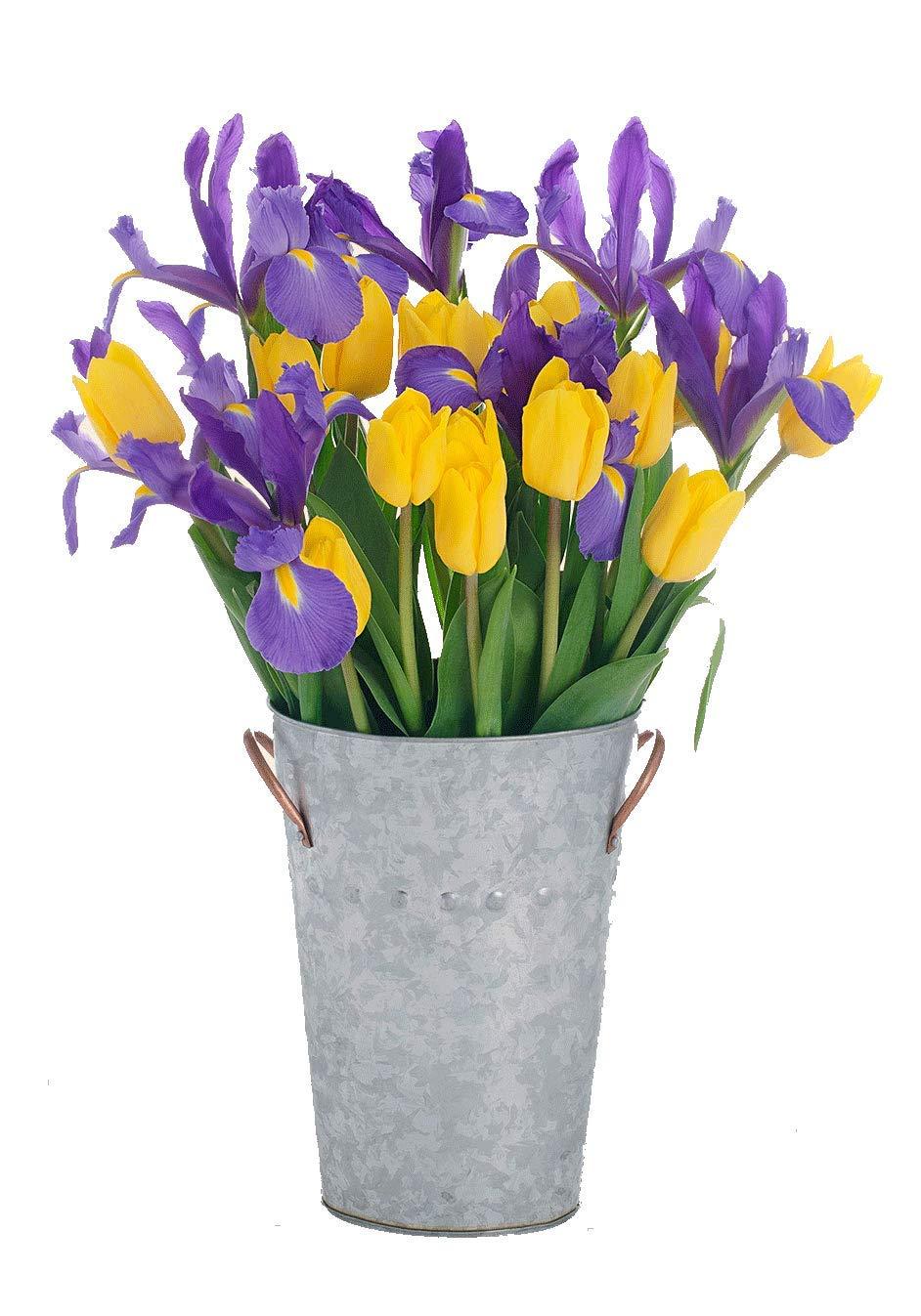 Stargazer Barn - Butterfly Bouquet - 2 Dozen Tulips & Iris with French Bucket Style Vase - Farm Fresh