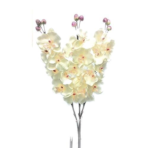 Orchid Vase Amazon