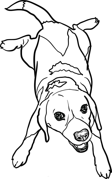 Amazon Com Cute Sweet Pen Sketch Beagle Puppy Dog Art Vinyl Sticker