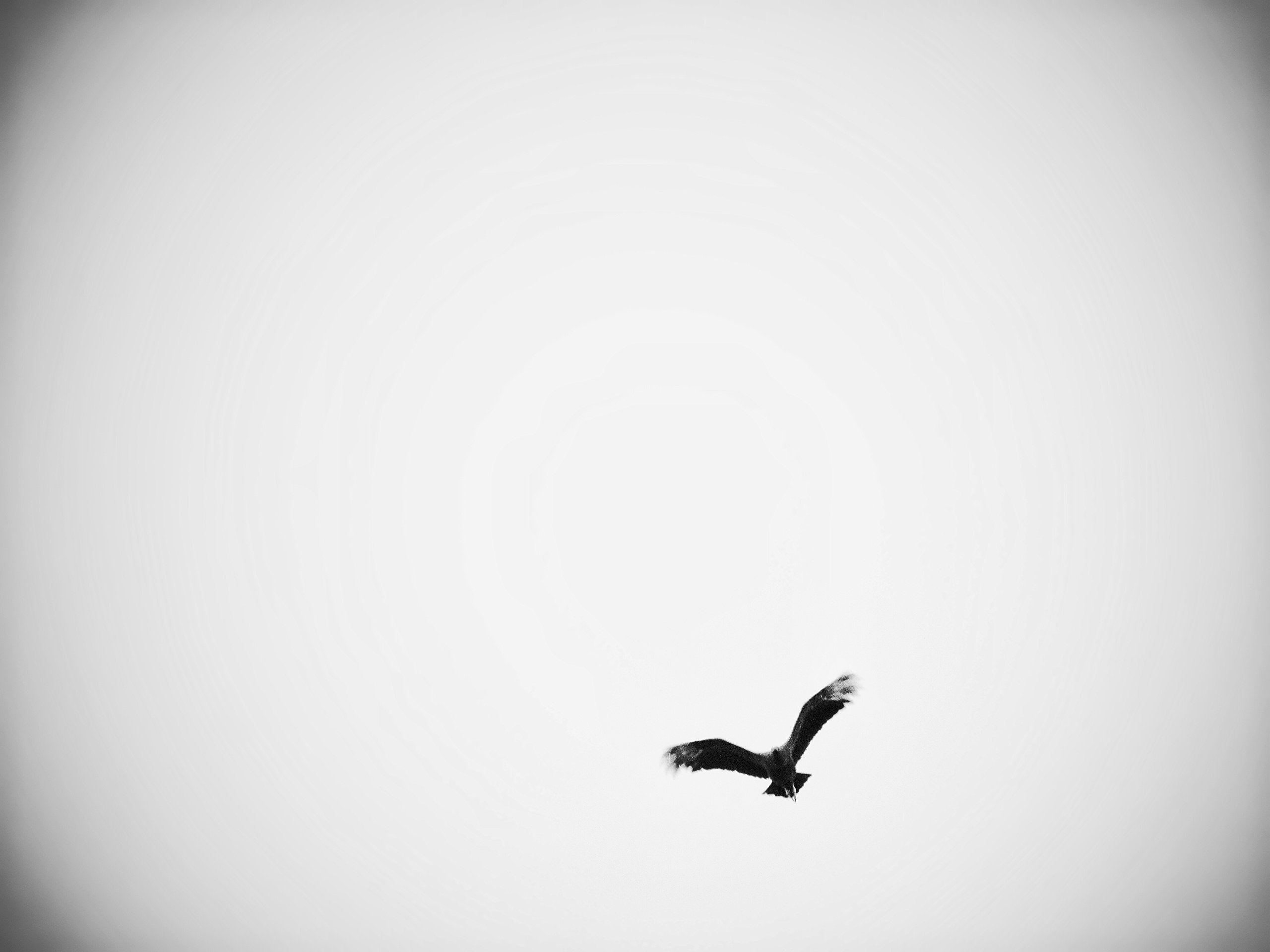 Black And White Bird by