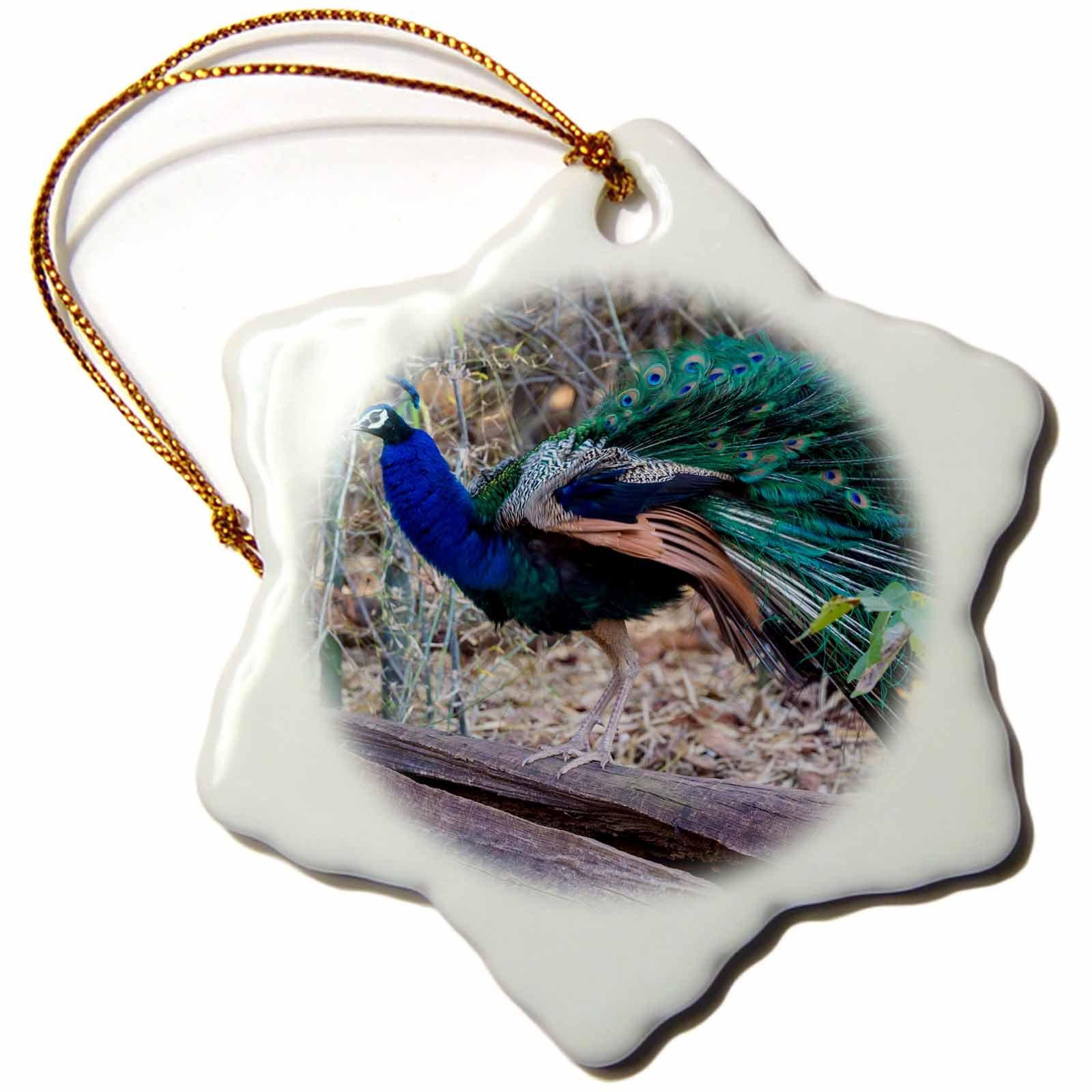 3dRose Danita Delimont - Birds - India. Peacock strutting in the Bandhavgarh Tiger Reserve. - 3 inch Snowflake Porcelain Ornament (orn_276800_1)