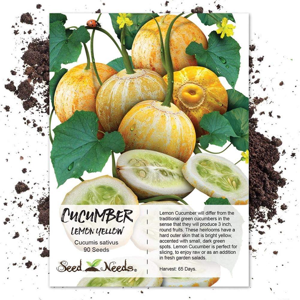 lamta1k 100 Unids Limón Pepino Semillas Cucumis Sativus Vegetales Fruta Jardín Yarda Alta tasa de Supervivencia - Semillas de Pepino