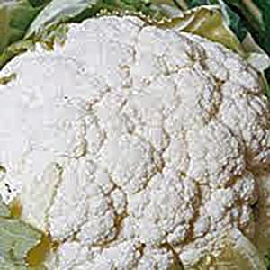 Cauliflower Seed, Snowball Y, Heirloom, Non GMO, 100 Seeds, Large, Delicious and Healthy
