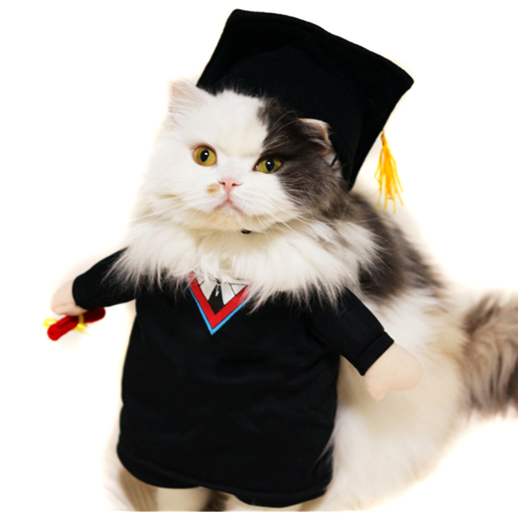 Alfie Pet by Petoga Couture - Kade the Graduate for Party Halloween Special Events Costume - Size: Small