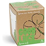 Mags - coffret cadeau porte-chance - grow me, good luck - graines trèfles à 4 feuilles (à faire pousser soi-même)