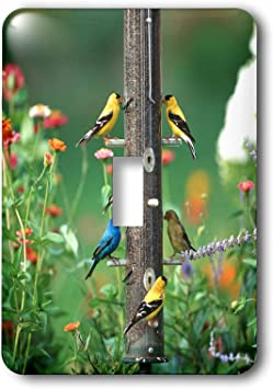 3drose Lsp 250962 1 Indigo Bunting American Goldfinches And A House Finch On Feeder Toggle Switch Mixed Amazon Com
