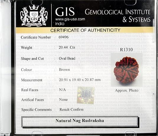 Amazon.com: Barishh Natural and Certified Nag- Savar Rudraksha Bead ...