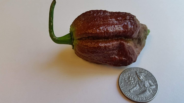 Chocolate Bhutlah SM Pepper Seeds 25+