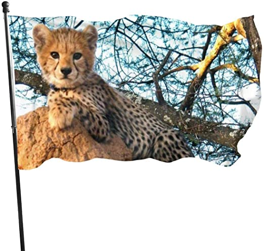 Viplili Banderas, Aguar Cat On A Tree Trunk Waterfall Endangered ...