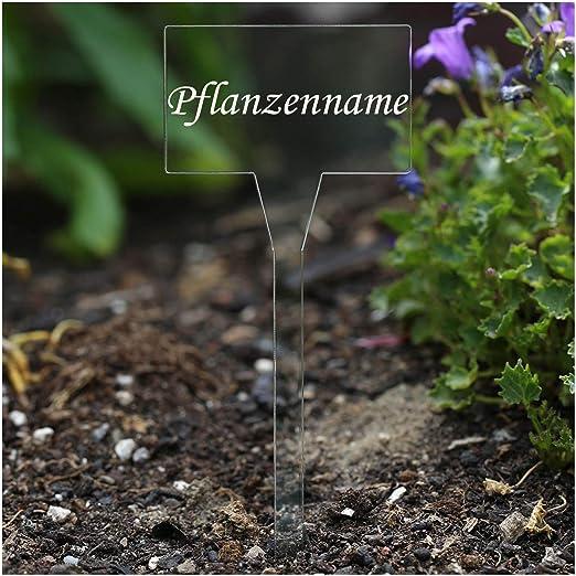 Acrílico cristal – Etiquetas para plantas (rectangular transparente – Jardín Conector, hierbas letreros, Planta, conector – Selección + Nombre Personalizado, Zitronengras: Amazon.es: Jardín