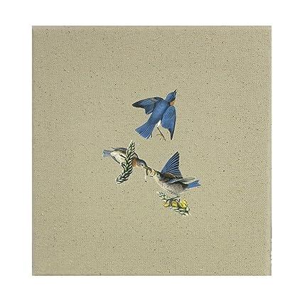 Amazon Com Style In Print Eastern Bluebird James Audubon Birds