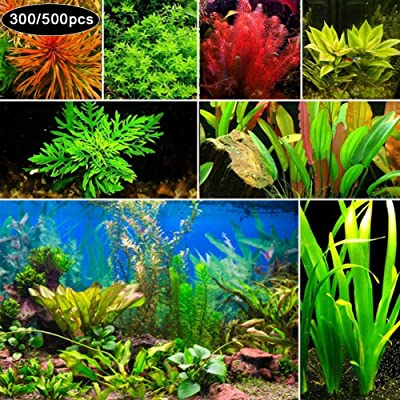 newshijieCOb 300/500Pcs Rare Aquatic Plant Seeds Herb Plant Aquarium Underwater Moss Grass Stem Plant Decor Ornamental Grass Plant- 300pcs Mixed Style Aquatic Plant Seeds : Garden & Outdoor
