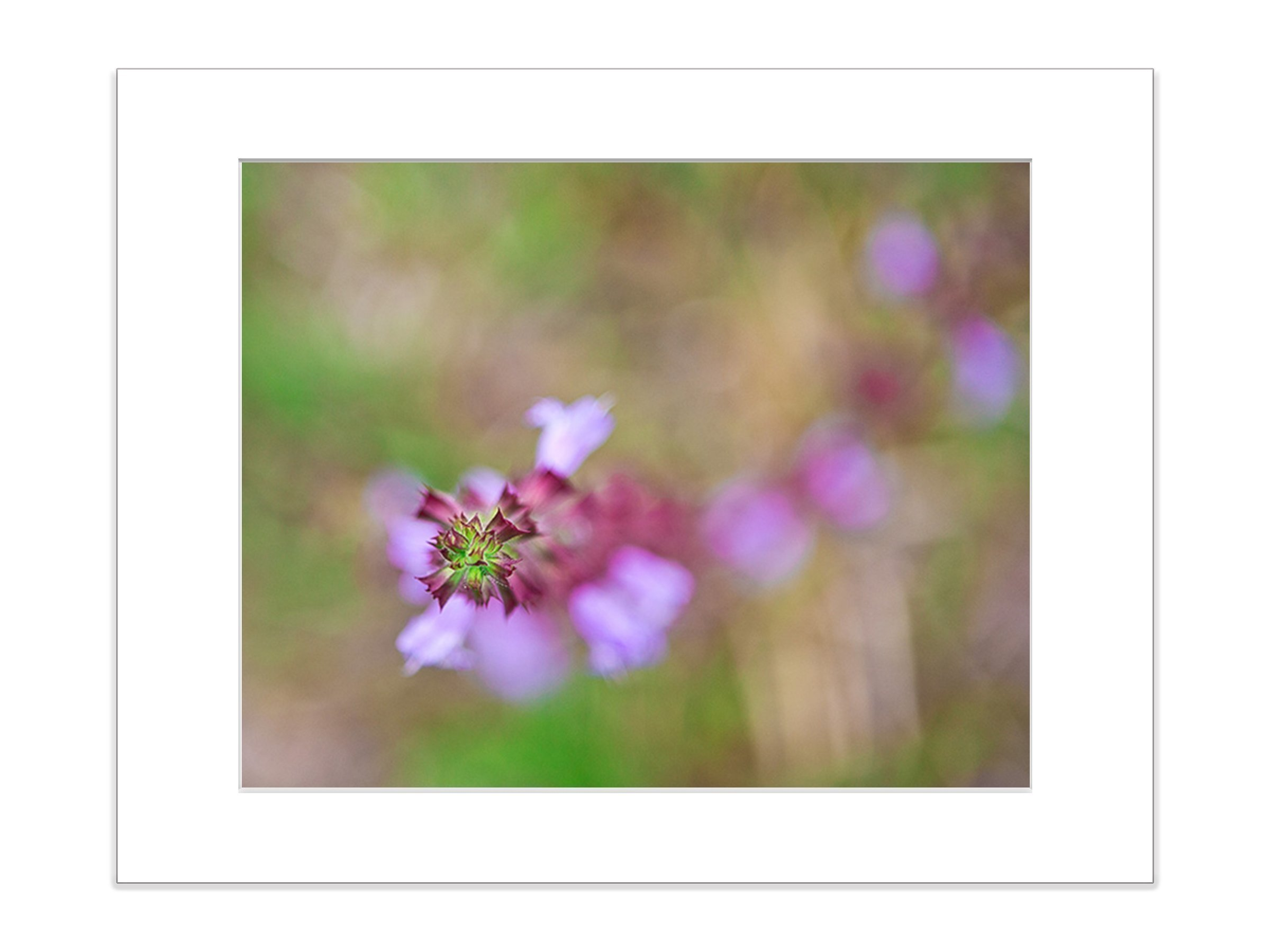 Purple Abstract Wildflower Botanical Nature Photo 8x10 InchMatted Print