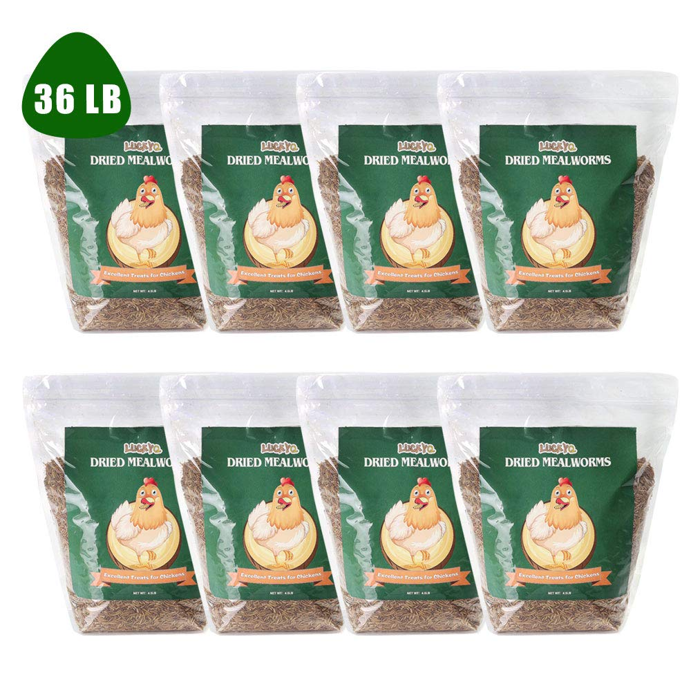LUCKYQ Bulk Dried Mealworms, High-Protein Chicken Feed 36Lbs, 100% Non-GMO Mealworm Treats for Birds, Chickens, Turtles, Fish, Hamsters and Hedgehogs All Natural Animal Feed by LUCKYQ