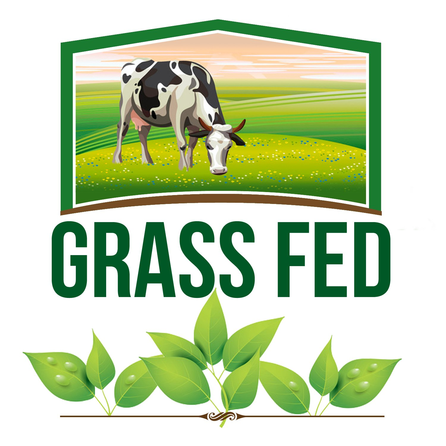 Tasty Superfoods Grass Fed Organic Ghee - Glass Jar of Pure, Unsalted Clarified Butter from Grass-Fed Cows - Best Healthy Oil for Indian Cooking, in Coffee, or for diets like Paleo and Whole30 (16oz) by Tasty Superfoods (Image #3)