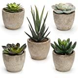 Coitak Artificial Succulent Plants Potted, Assorted Decorative Faux Succulent Potted Fake Cactus Cacti Plants with Pots, Set