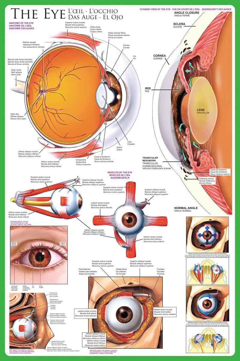 Berühmt Auge Anatomie Video Zeitgenössisch - Anatomie Ideen ...