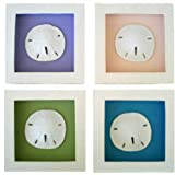 4 Sand Dollar Shadow Boxes with Multi Colored Background